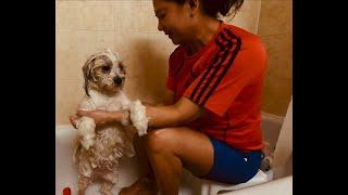 TINTIN shichon's bath routine