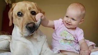 Videos de risa de bebes - Se ríen de los perros