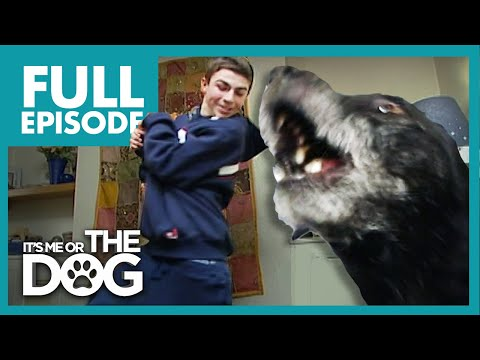 World's Smallest Bodyguard: Rex | Full Episode | It's Me or the Dog