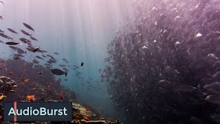 What Coral Reef Fish Sound Like