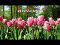 Keukenhof 2018 - Beautiful flowers in the most famous spring garden in the world