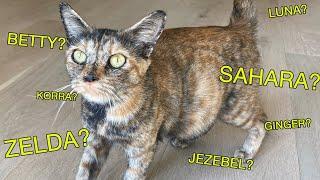 Naming My Stray Pregnant Cat!