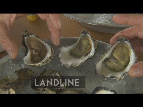Growing the perfect wine for Australian oysters, in Australia