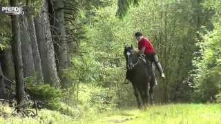 Peter Pfister - Orlando - Vom Starten eines jungen Pferdes bis zum ersten Aufsitzen - Trailer