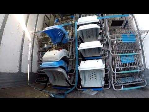 Walmart Shopping Carts Load