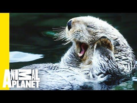 Living and Loving (Animals) in Alaska