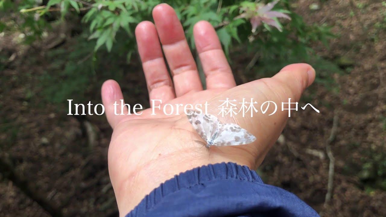 森歩き日記Vol.9  「森林の中でお誕生日祝い」