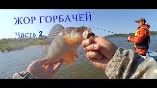 Ловля окуня. 2 часть нашей рыбалки на Оби