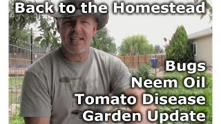 Bugs, Neem Oil, Tomatoes, Disease - Back to the Homestead