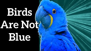 Structural Color in Birds - Blue Feathers Are Not Blue!