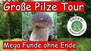 Große Pilze Tour - Mega Funde ohne Ende