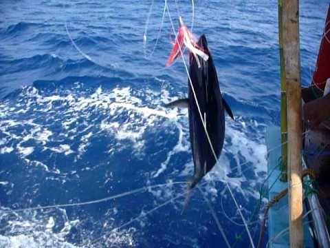 Sri Lanka,ශ්රී ලංකා,Fishing Trip On A Trawler:Tuna Line Fishing (12)