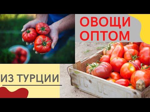 Овощи и фрукты оптом из Турции + важная информация