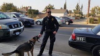 Best Job In The World Bakersfield Police K9 German Shepherd