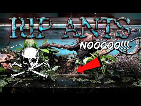MY GREATEST ANT COLONY DIED | RIP FIRE NATION
