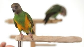 4 Best Parrot Training Tips | Parrot Training