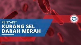 Sel darah merah merupakan salah satu komponen di dalam darah yang berguna untuk transportasi oksigen.