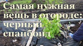 САМАЯ НУЖНАЯ ВЕЩЬ в огороде - черный СПАНБОНД! / Most necessary thing in the garden - black spunbond