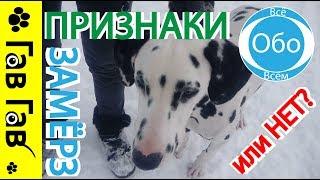 Признаки мёрзнующей собаки