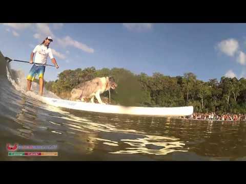 Surfing Dog Spectacular Noosa, Australia