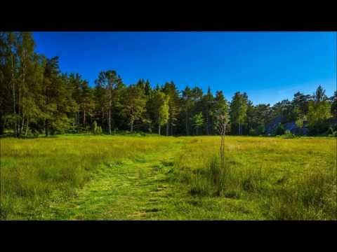 Swedish Folk Music - Swedish Meadow