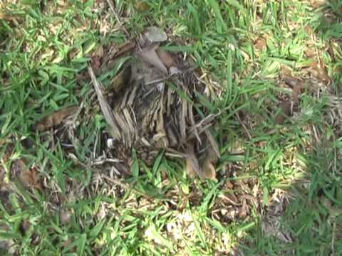 City Of Houston Planted Stump In Yard Gessner