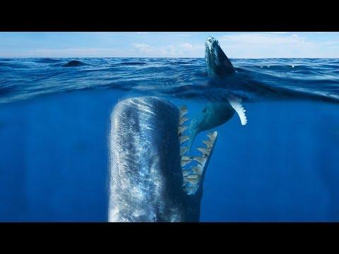 DEADLIEST Whale To Ever Live! (Livyatan Melvillei)