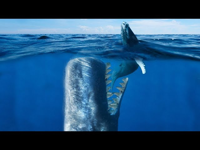 BIGGEST and DEADLIEST Whale To Ever Live! (Livyatan Melvillei)