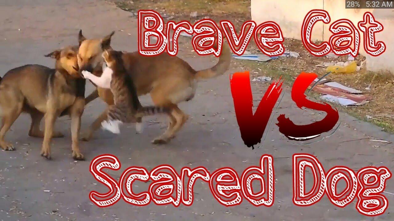 Brave Cat VS Scared Dog.Cat VS Dog.Cat & Dog.