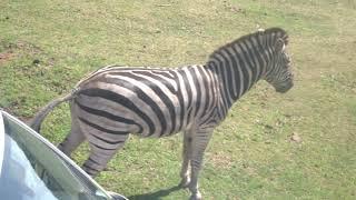 Fotosafari Serengeti Park 2019