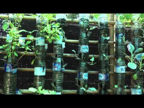 Vertical Gardens, Island Organics -  Koh Samui, Thailand