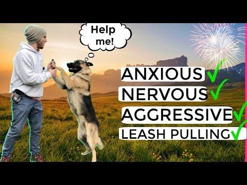 How to stop Dog Anxiety, Aggression, Pulling on the leash! German Shepherd Training Full tutorial