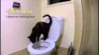Fully toilet trained cat