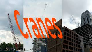 Cranes (David Bowie Parody)