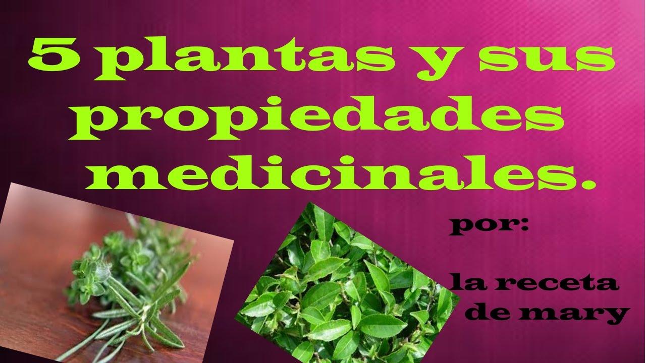 plantas medicinales 5 plantas y sus propiedades