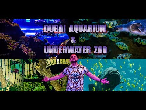 Dubai Aquarium and Underwater ZOO || BEING INSIDE – DUBAI ||