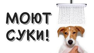 Собаку в душ засунули! Хозяева дебилы...