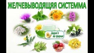 Застой желчи, лечение застоя желчи, травы, Фито чай ХОЛЕСТОН. Холецистит, Дискинезия лечение.