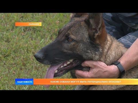 Вопрос: Насколько опасны одичалые собаки для человека?