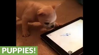 Puppy plays pet themed game on tablet
