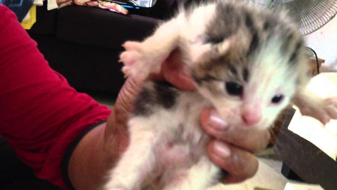 Suara Anak Kucing Baru Lahir Mp3