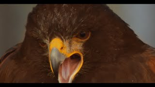 Chaman & Sully - 346 Oiseaux