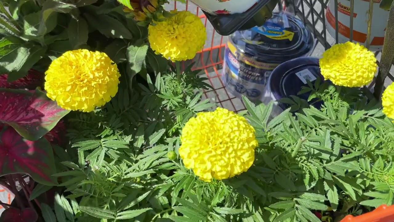 Friday Flower Haul!