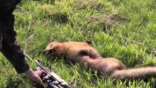 Polku - Metsästyselokuva