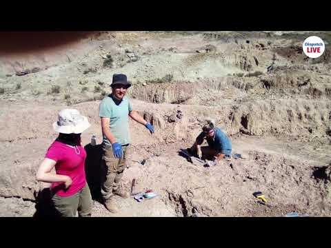 dinosaur-bone-bed-found-in-sterkspruit-village