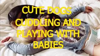 Cute dogs cuddling and playing with babies Dog & baby compilation YouTube