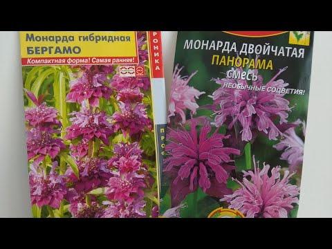 МОНАРДА. Многолетние растения. Посев семян монарды на рассаду 16.04.