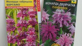 мОНАРДА. Многолетние растения. Посев семян монарды на рассаду 16.04