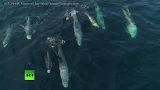 Восторг от жизни: маленькие дельфины резвятся в заливе Монтерей