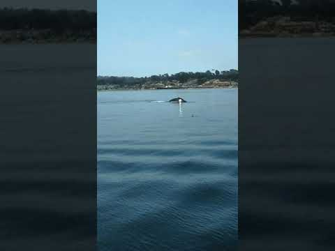 Monterey Bay whale tail